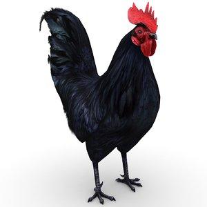 3D rooster - model