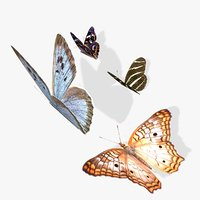 simple butterflies animation 3D model