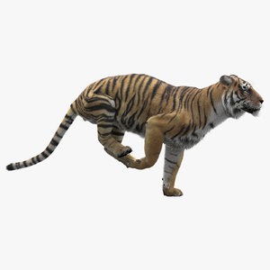 3D realistic tiger fur animators model
