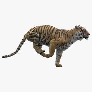3D realistic tiger fur animators model