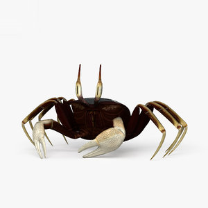 horn ghost crab 3D