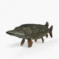 3D northern pike