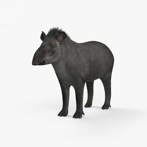 tapir mammal animal 3D