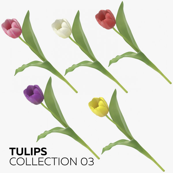 tulips 03 3D model