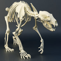 bear skeleton 3D