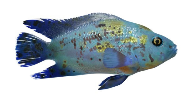 3D aquarium fish electric blue model