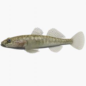 3ds max gymnogobius breunigii swimming