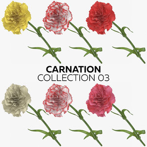 3D carnation 03