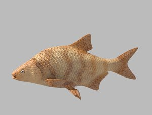 3D fish rigged