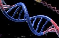 3D model dna genetic strand