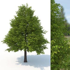 3D model black tupelo tree 1