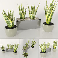plant sansevieria indoor 3D model