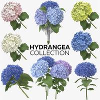 hydrangea photorealistic 3D model
