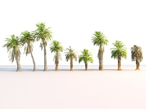 3D model palm pack 9 tree
