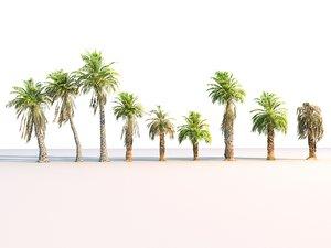 3D model palm pack 9 tree