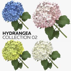 hydrangea 02 model