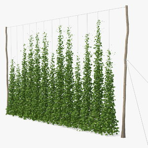 3D green growing hops plantation model
