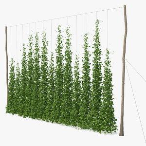 3D green growing hops plantation model