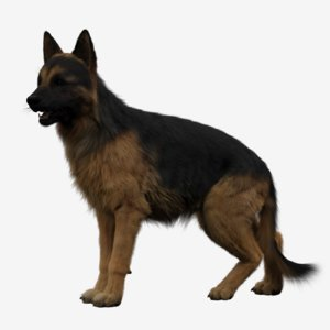 3D german shepherd rigged