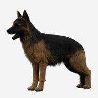 dog german shepherd 3D model
