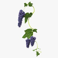 3D black bunch grapes branch