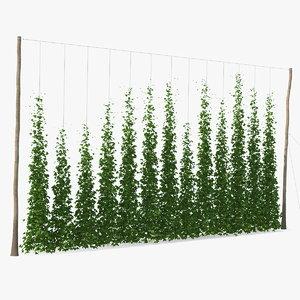 3D growing green hops plantation