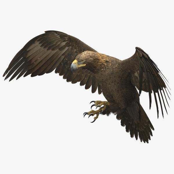 3D golden eagle rigged animate