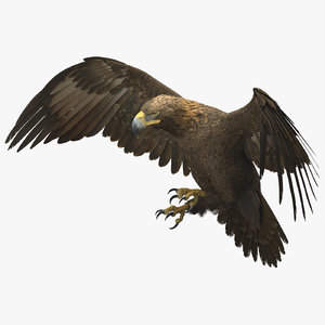3D golden eagle rigged animate