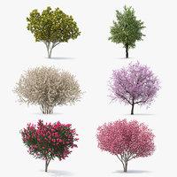 3D model flowering bushes trees 3