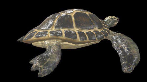 green turtle 3D