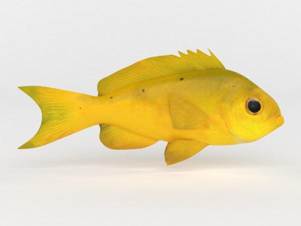 3D creole fish