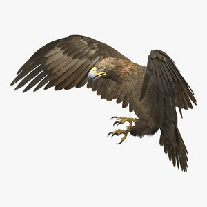 golden eagle animations 3D model