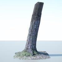 Tree Trunk - 02