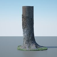 Tree Trunk - 04