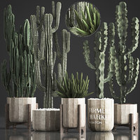 3D model plants exotic cactus