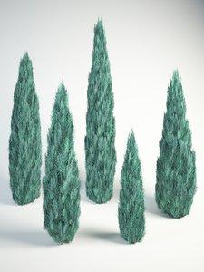 3D rocky mountain juniper blue