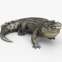 3D model realistic crocodile animating