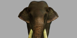 3D model elephant riggged