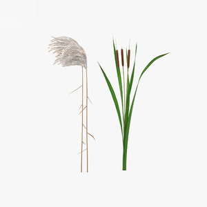 reed plant nature model