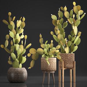 3D plants exotic cactus