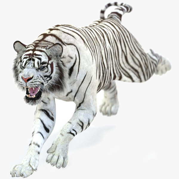 white tiger 2 animations 3D