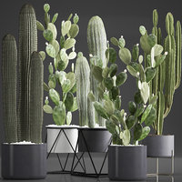 plants exotic cactus model