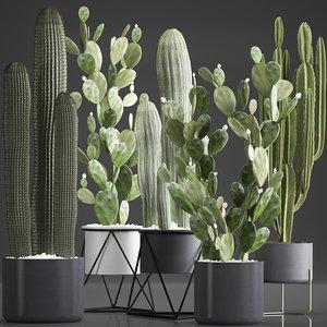 plants exotic cactus model