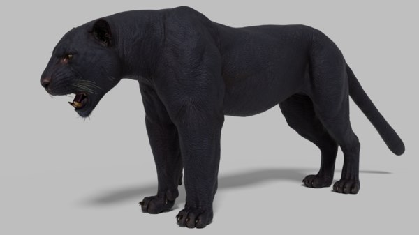 black panther rigged model