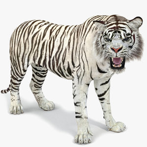 white tiger rigged 2 3D model