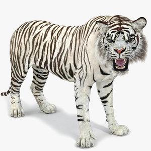 white tiger rigged 2 3D model