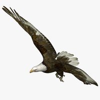 3D eagle bird animal model