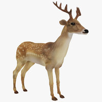 3D deer animal mammal