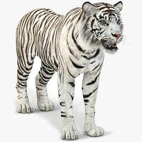 white tiger 2 3D model