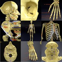 3D model human skeleton labelling parts